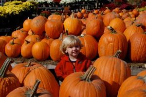 my little pumpkine