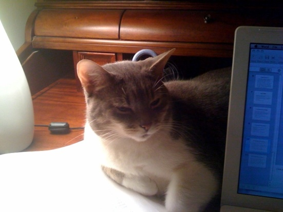 Jurist Kitty
